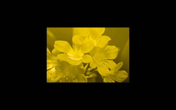 Image color filter